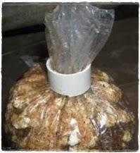 budidaya jamur tiram putih