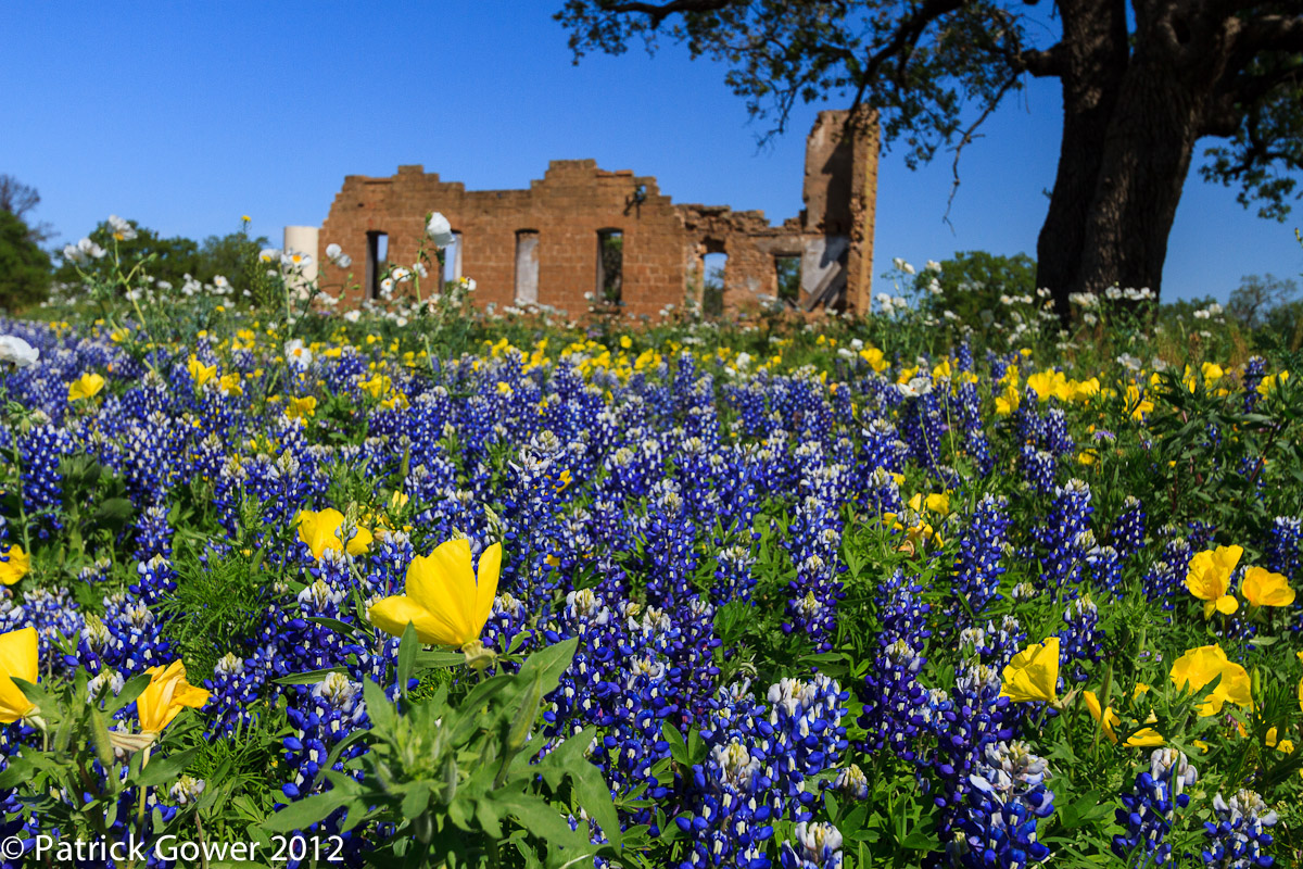 Pat Gower Photography Blog Texas Hill Country Wildflowers