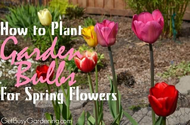 Spring-bulbs-planting