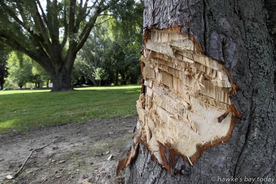 Tree vandalism at Eskdale Park, Eskdale, Napier. photograph