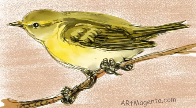 Wood Warbler sketch painting. Bird art drawing by illustrator Artmagenta