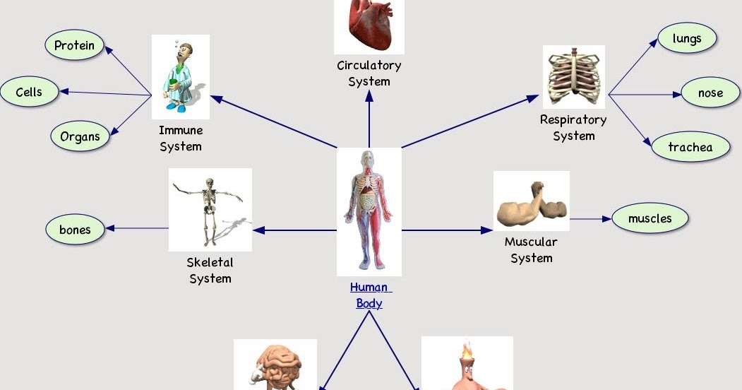 MALIK GK POWER: HUMAN BODY FACTS