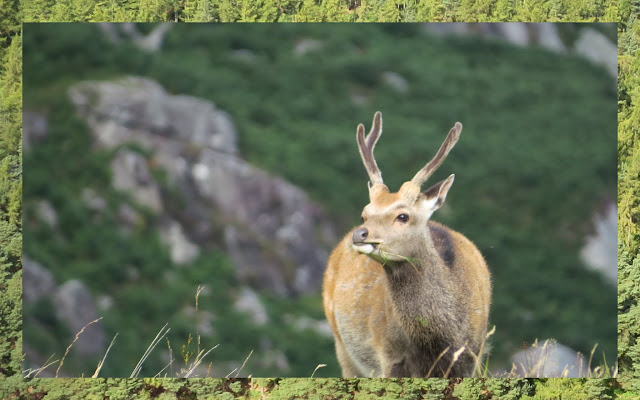 Hillwalking at Glendalough in County Wicklow - A Magnificent Deer