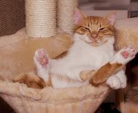 Pisicile visează la fel ca oamenii