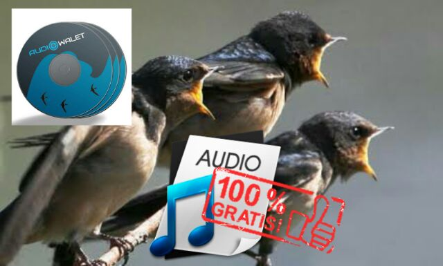suara walet gratis