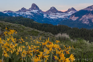 Cramer Imaging's fine art landscape photograph of the Teton mountains with wild sunflowers in front at sunset in Wyoming