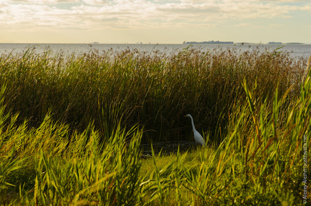 Lake Albert foreshore. Meningie, South Australia