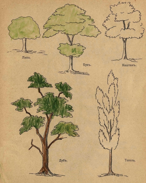 как нарисовать крону дерева