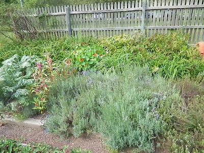 Garden at John Ferry House