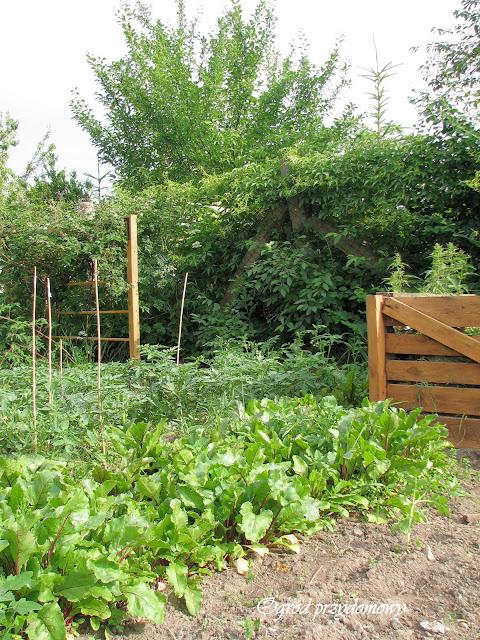 kultura sąsiedzka, kultura między ludźmi, ogród przydomowy