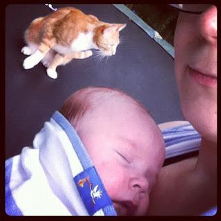 Baby im Tragetuch eingeschlafen und Katze