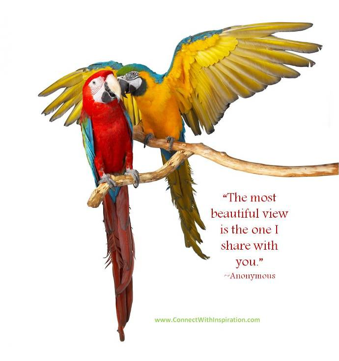 Funny Pictures Gallery Quotes Birds Bird Quotes