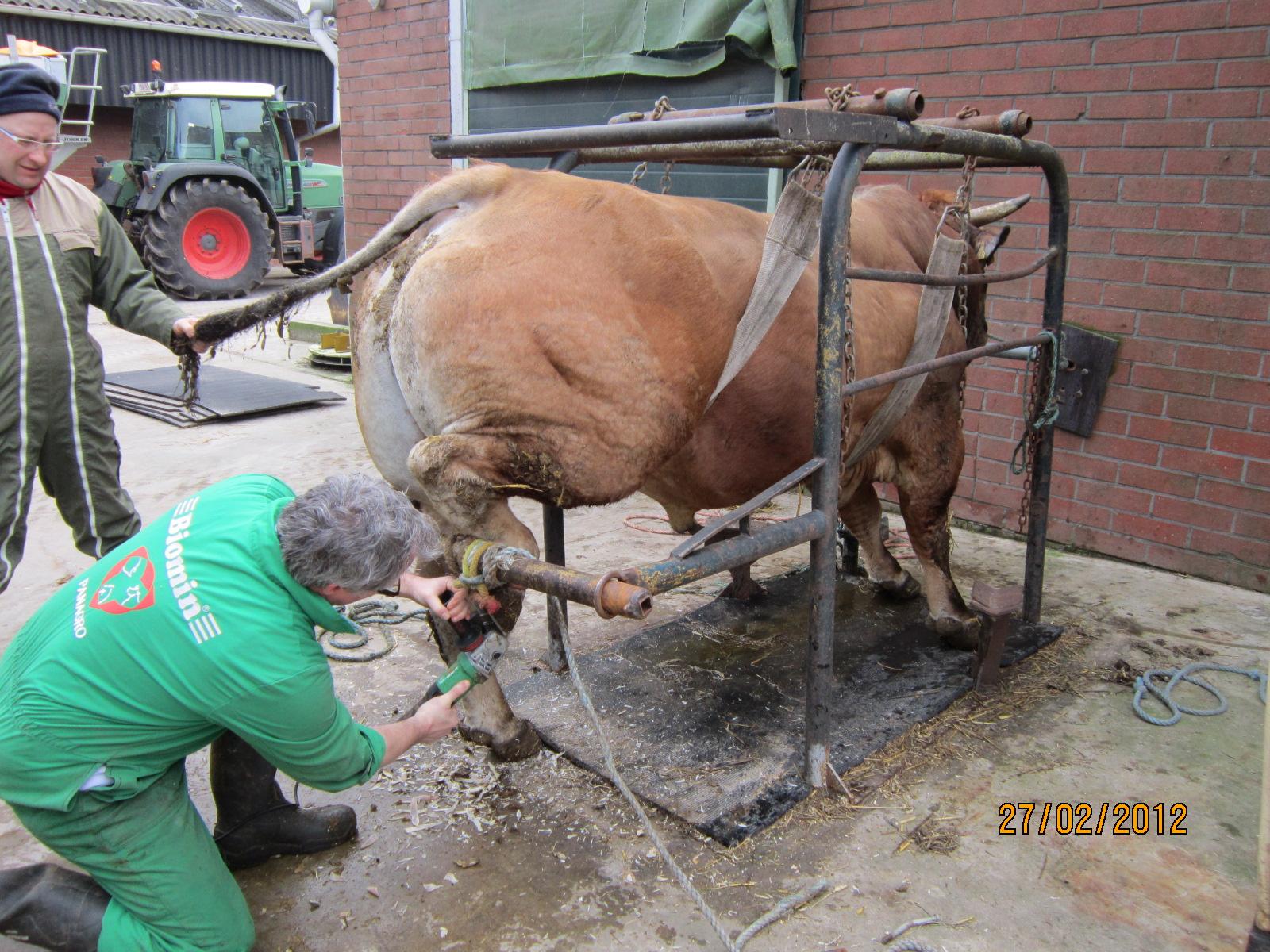 cfaa 47  6 apprentis agricoles en flandre du 18  02 au 10  03  2012  baln u00e9o et manucure  u00e0 la ferme