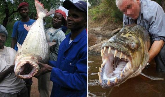 Hayvanlar Aleminden En Korkunç 5 Balık Türü
