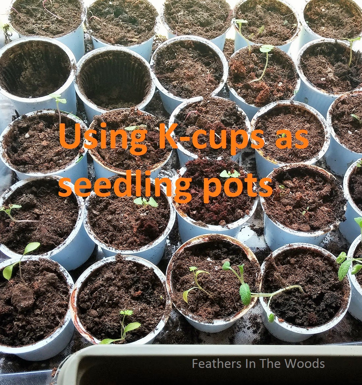 reuse K-cups for seedlings