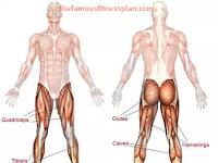 Latihan Otot Kaki Yang Efektif Dengan Metode Cardio Quads