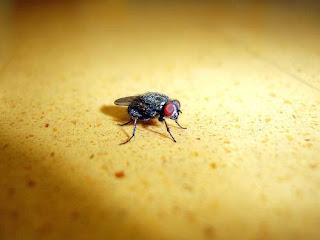 Tips Cegah dan Usir Lalat