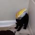 H πιο «ένοχη» γάτα στον κόσμο (video)