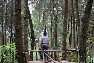 Hutan Pinus Kragilan, Spot Wisata Cantik yang Lagi Hits di Instagram