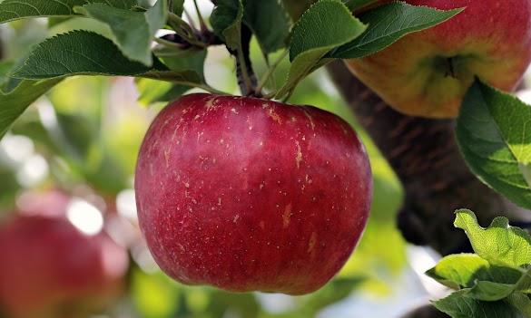 10 Makanan Yg Sehat Untuk Jantung