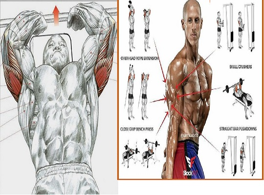 6 Exercises To Build Horseshoe Triceps
