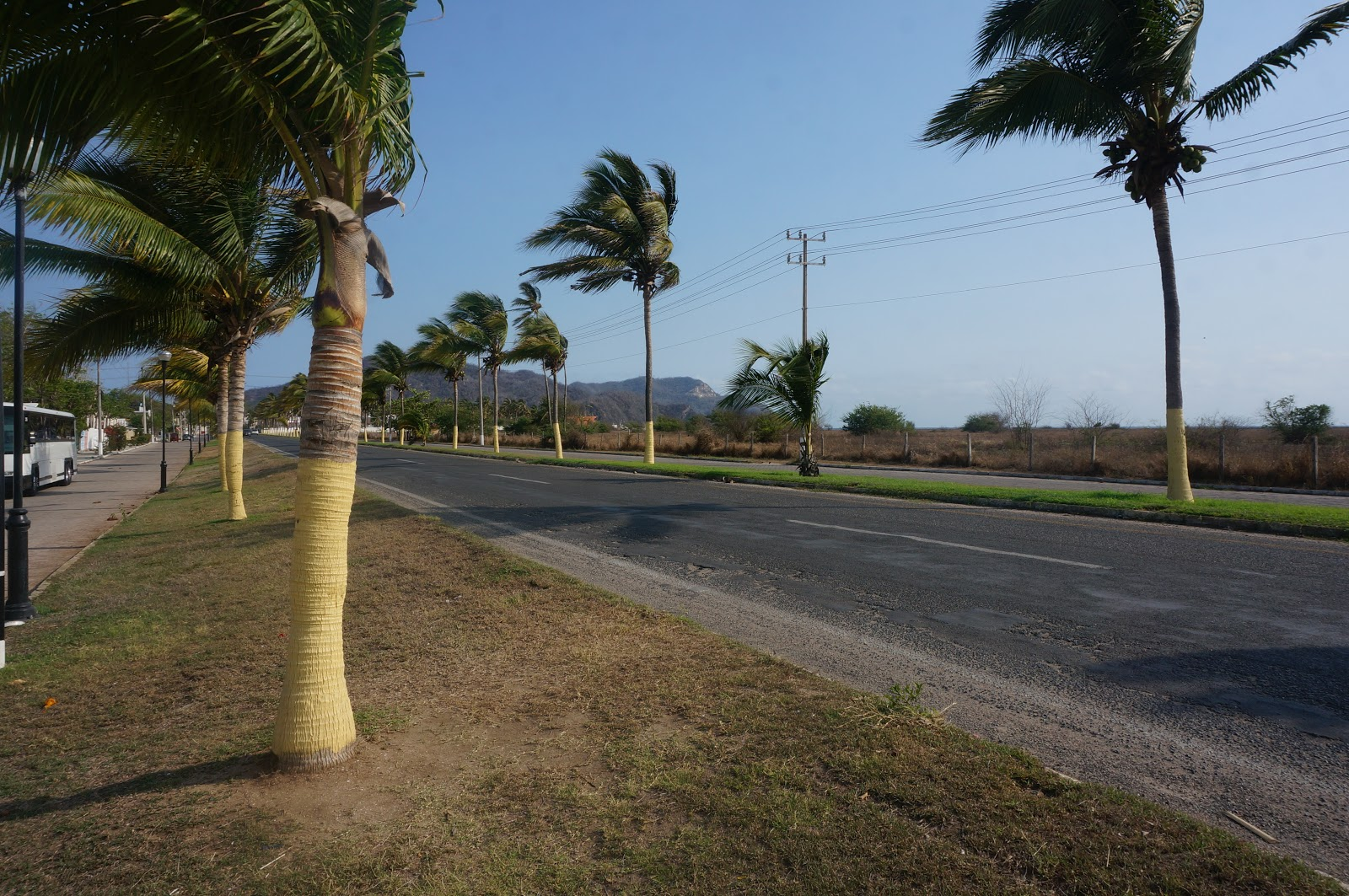 Relatively mexpatriate — in the key of steve: why are the trunks of palm  SE35