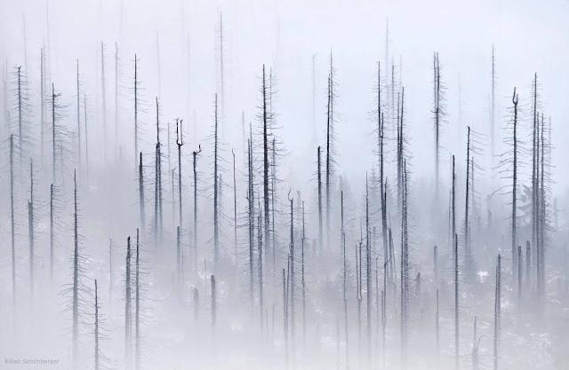Green Pear Diaries, fotografía, fotógrafo, Kilian Schönberger, paisajes