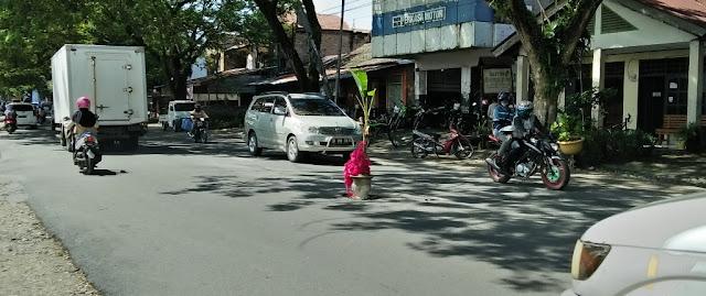 FOTO: Ada Pohon Pisang di Tengah Jl Trans Sulawesi, Masamba