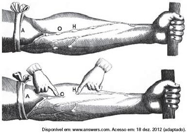 Manual da Biologia: QUESTÕES DE ANATOMIA HUMANA NO ENEM