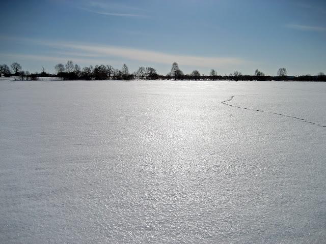 Image result for suusaväli