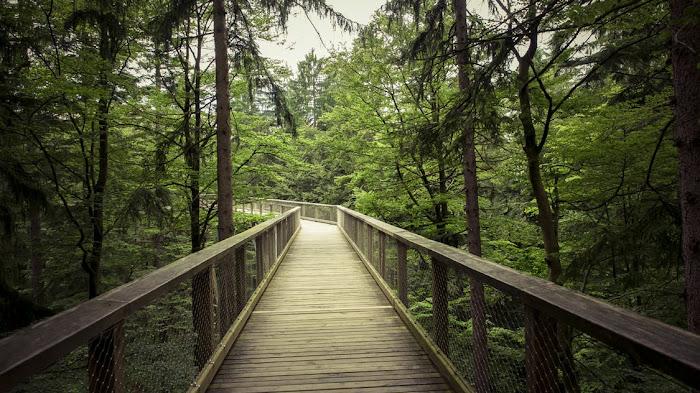 Light landscape nature forest