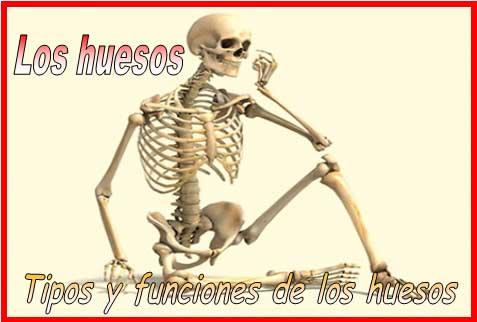 Los huesos. Tipos y funciones de los huesos [Anatomía y fisiología ...