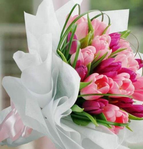 Contoh Gambar Bunga Tulip
