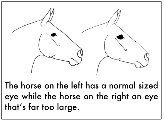 Animal Coloring Pages For Kids Printable together with 16468 in addition Coloring Pages Horses besides D7 93 D7 A4 D7 99  D7 A6 D7 91 D7 99 D7 A2 D7 94  D7 A1 D7 95 D7 A1 D7 99 D7 9D further Horse Coloring Pictures Pages Sheet. on large breeds of horses 2