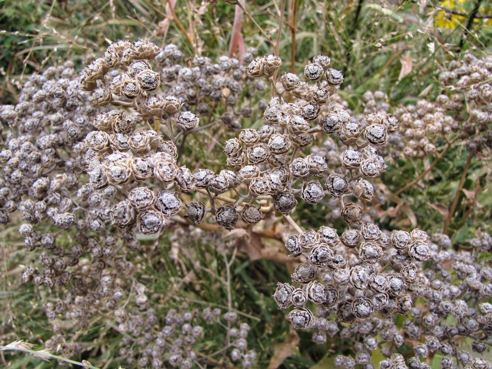 A Corner Garden: Taking Liberties with Wildflower Wednesday