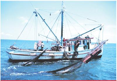 मोठय़ा माशांना पकडण्यासाठी केमिकलचा वापर