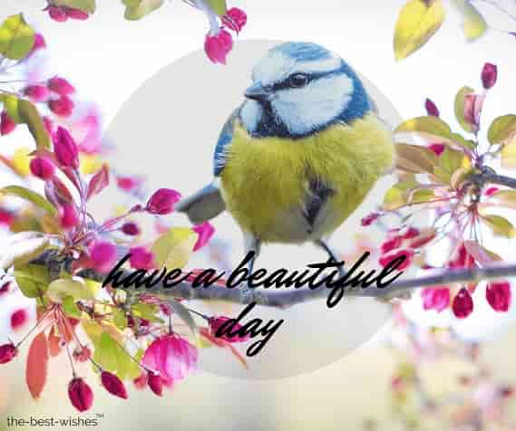 good morning nature birds images