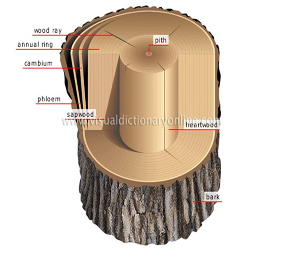 Gmelina Wood Brown Colors