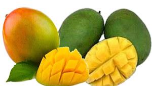 Manfaat buah Mangga bagi Kesehatan Tubuh dan Kecantikan