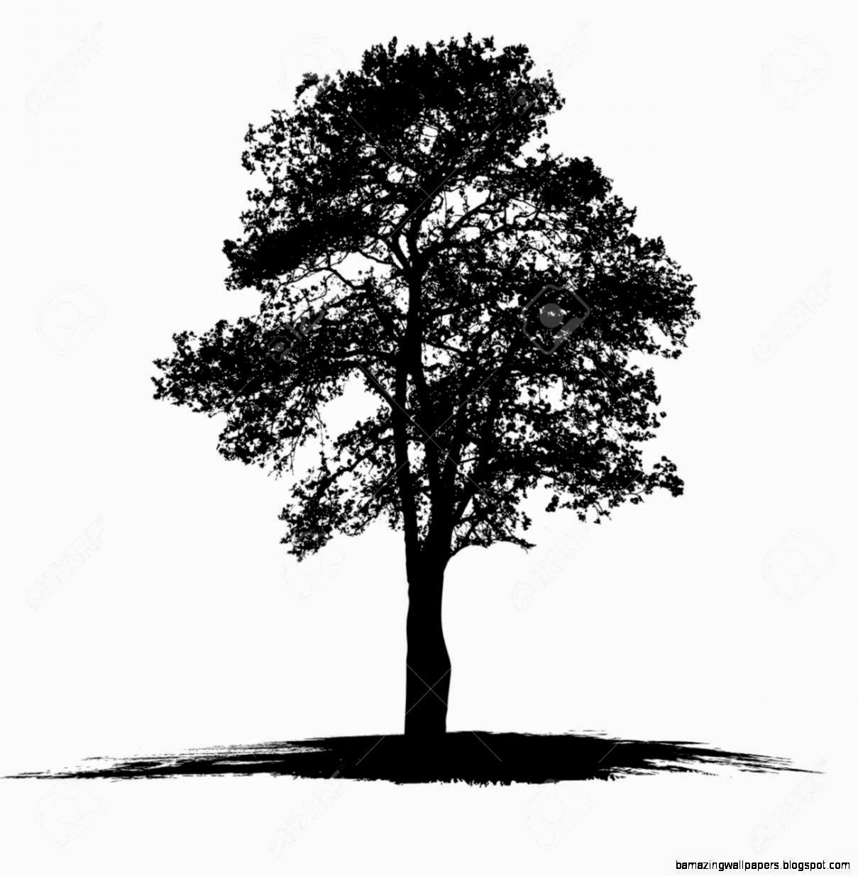 Black And White Tree Drawings | Amazing Wallpapers