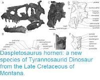 http://sciencythoughts.blogspot.co.uk/2017/03/daspletosaurus-horneri-new-species-of.html