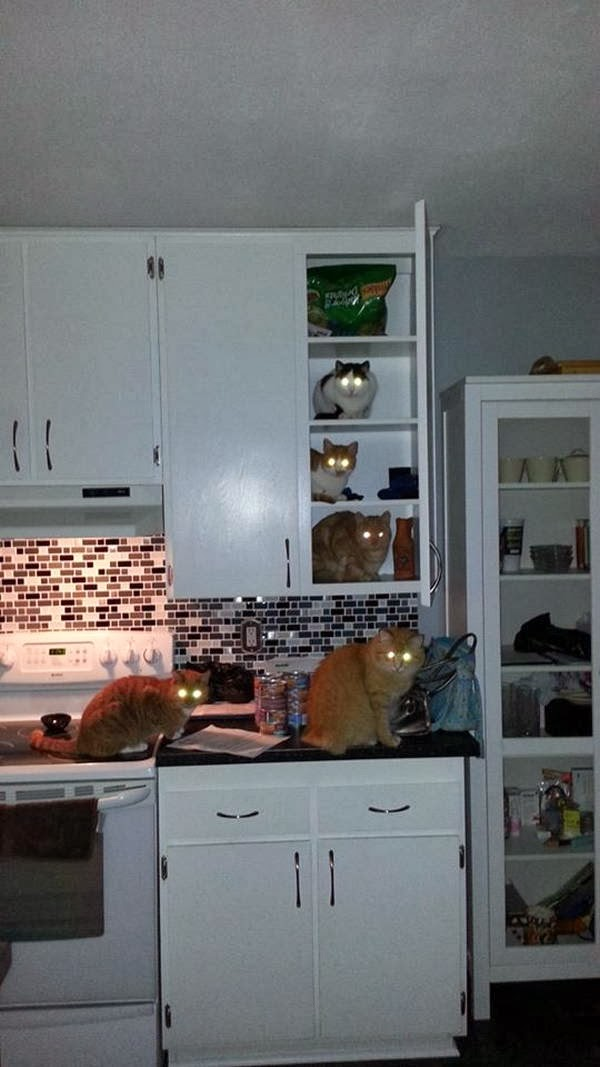 Funny cats - part 90 (40 pics + 10 gifs), five cats on kitchen cabinet
