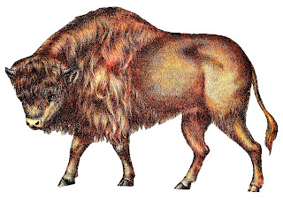 buffalo image antique illustration digital download