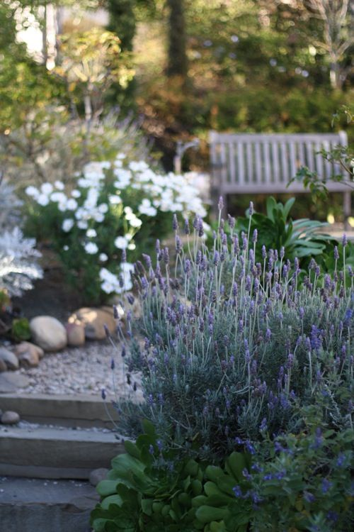 A french country garden with lavender and steps