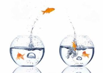 salto-peces-peceras-2.jpg