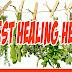 5 Best Healing Herbs