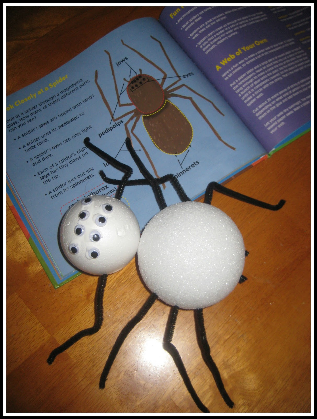 Relentlessly Fun Deceptively Educational Spiders Learn