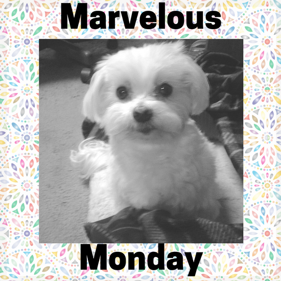 #lexithemaltese1, On My Kindle Book Reviews, Instagram
