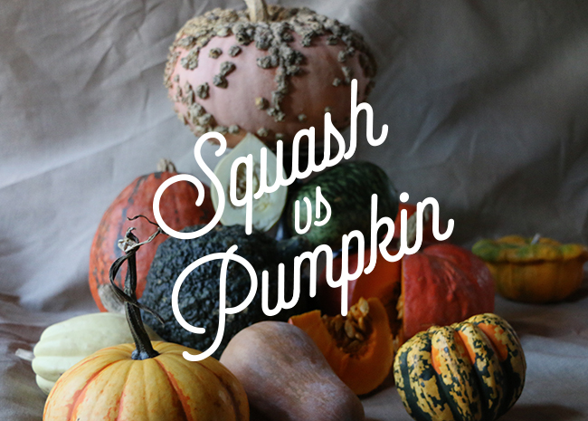 Pie Wars - Pumpkin or Squash?