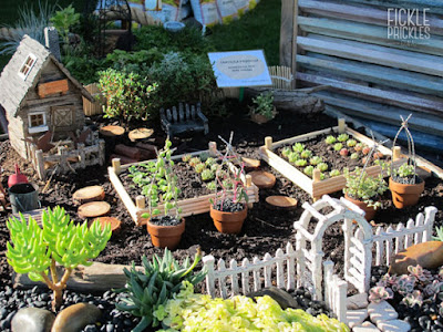 Succulent miniature farm garden in wheelbarrow